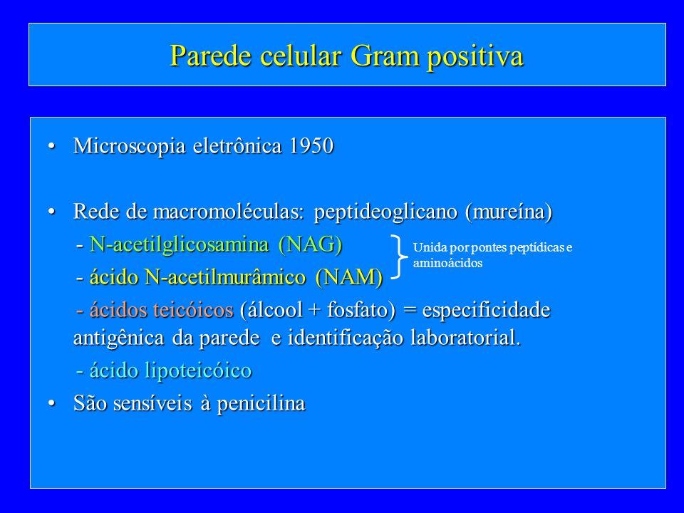 Parede celular Gram positiva Microscopia eletrônica 1950Microscopia eletrônica 1950 Rede de macromoléculas: peptideoglicano (mureína)Rede de macromolé