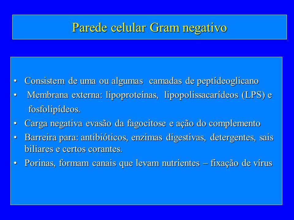 Parede celular Gram negativo Consistem de uma ou algumas camadas de peptídeoglicanoConsistem de uma ou algumas camadas de peptídeoglicano Membrana ext