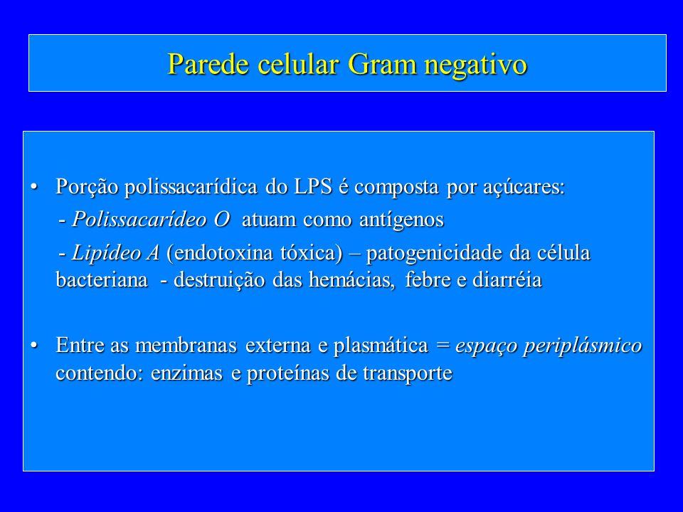 Parede celular Gram negativo Porção polissacarídica do LPS é composta por açúcares:Porção polissacarídica do LPS é composta por açúcares: - Polissacar