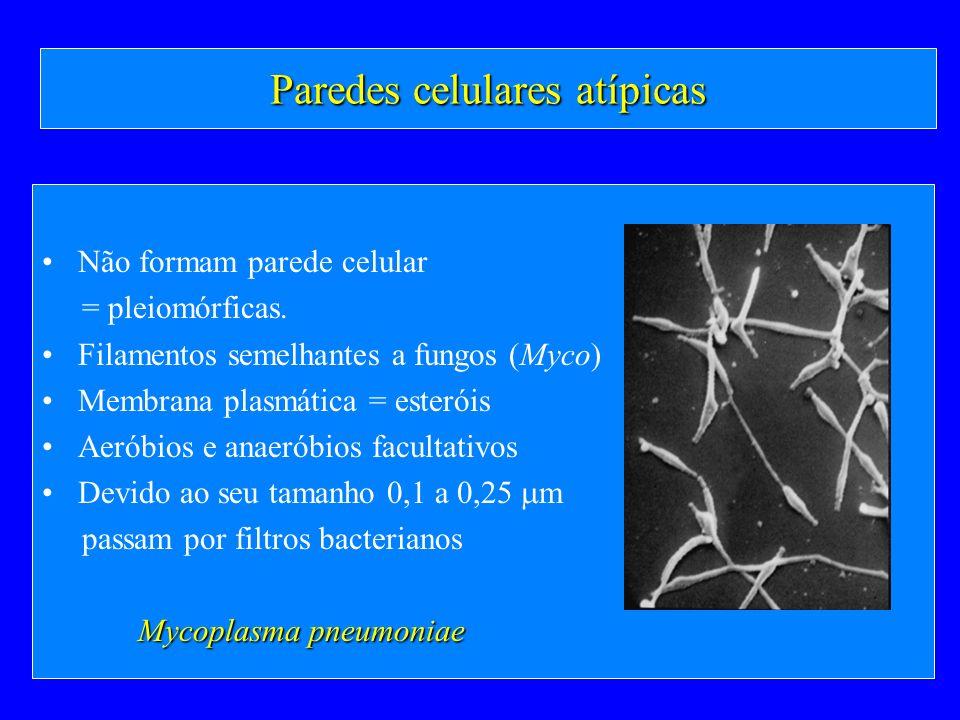 Paredes celulares atípicas Não formam parede celular = pleiomórficas. Filamentos semelhantes a fungos (Myco) Membrana plasmática = esteróis Aeróbios e