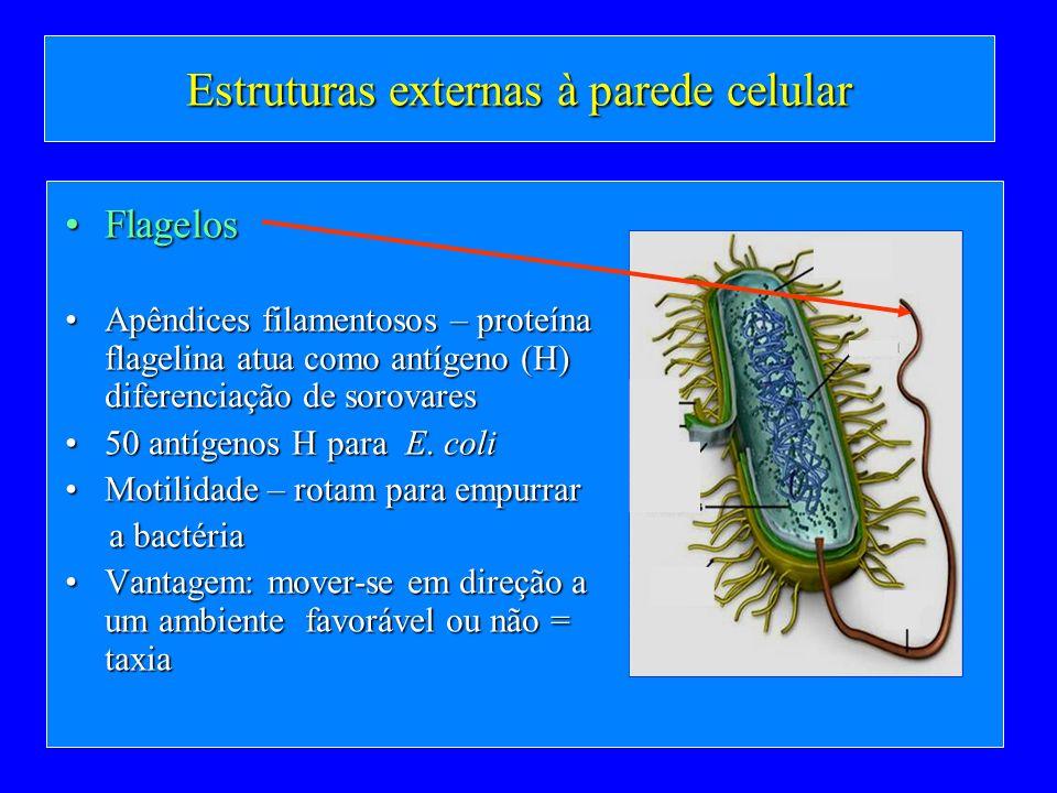 Estruturas externas à parede celular FlagelosFlagelos Apêndices filamentosos – proteína flagelina atua como antígeno (H) diferenciação de sorovaresApê