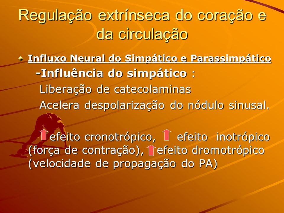 Regulação extrínseca do coração e da circulação Influxo Neural do Simpático e Parassimpático -Influência do simpático : -Influência do simpático : Lib