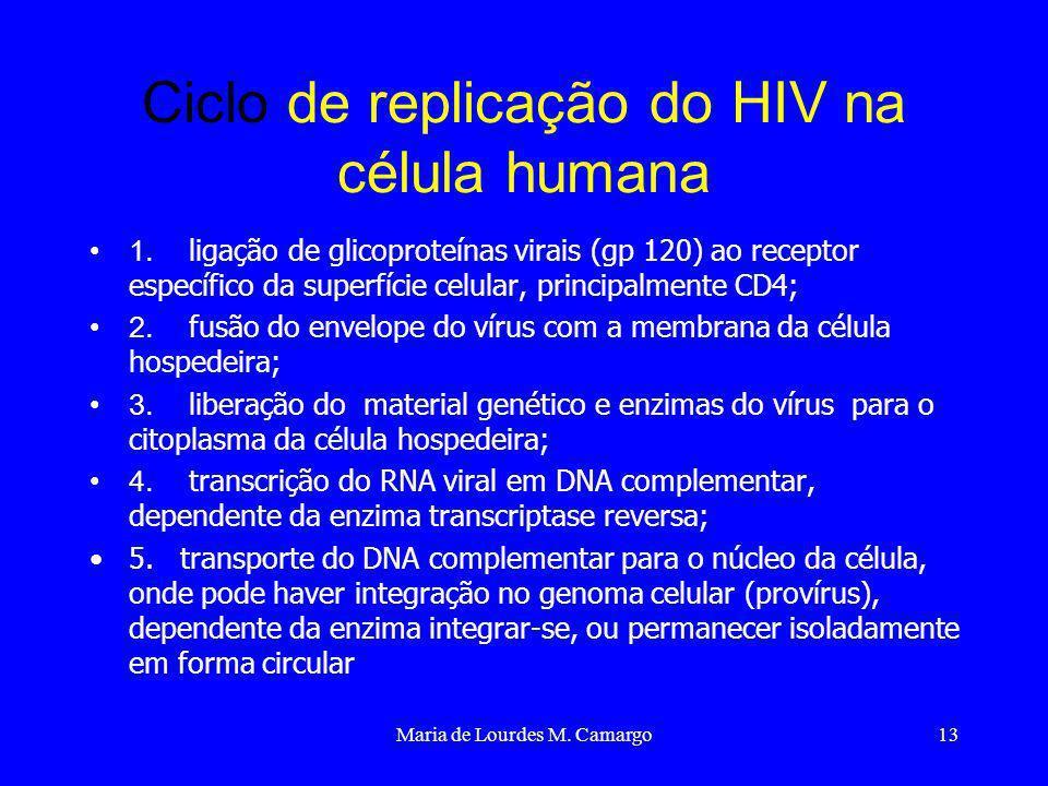 Maria de Lourdes M. Camargo13 Ciclo de replicação do HIV na célula humana 1. ligação de glicoproteínas virais (gp 120) ao receptor específico da super