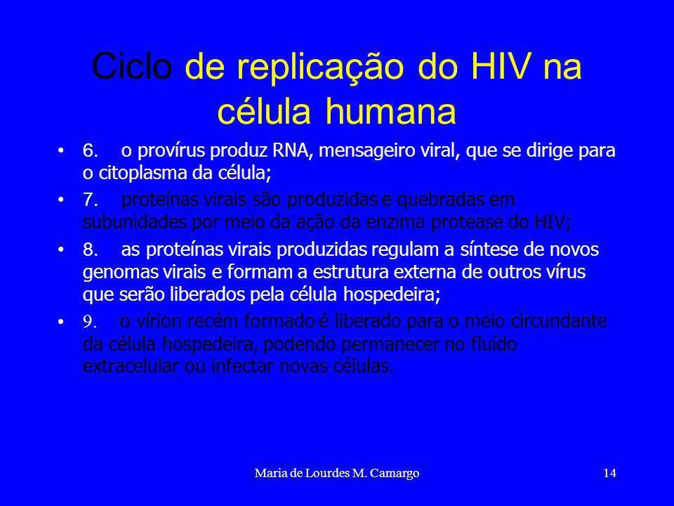 Maria de Lourdes M. Camargo14 Ciclo de replicação do HIV na célula humana 6. o provírus produz RNA, mensageiro viral, que se dirige para o citoplasma