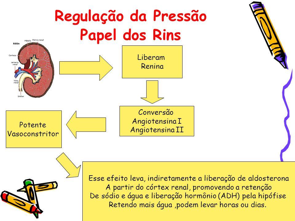 Regulação da Pressão Papel dos Rins Liberam Renina Conversão Angiotensina I Angiotensina II Potente Vasoconstritor Esse efeito leva, indiretamente a l