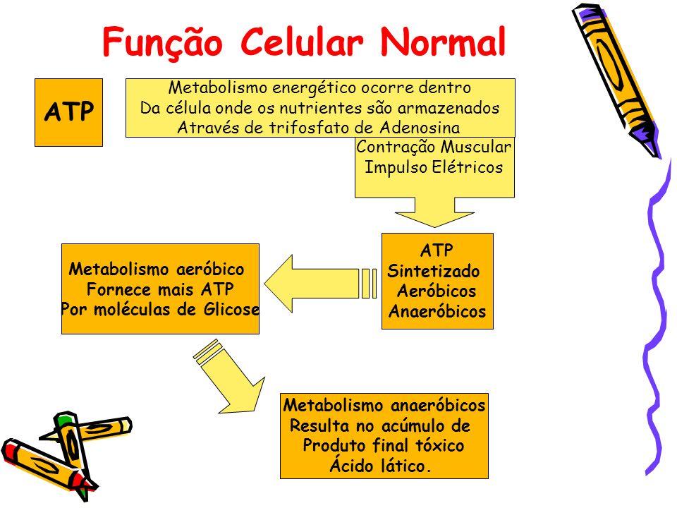 Função Celular Normal ATP Metabolismo energético ocorre dentro Da célula onde os nutrientes são armazenados Através de trifosfato de Adenosina ATP Sin