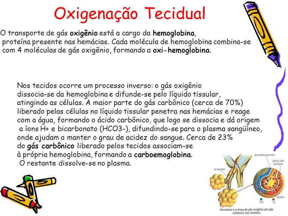 Oxigenação Tecidual O transporte de gás oxigênio está a cargo da hemoglobina, proteína presente nas hemácias. Cada molécula de hemoglobina combina-se