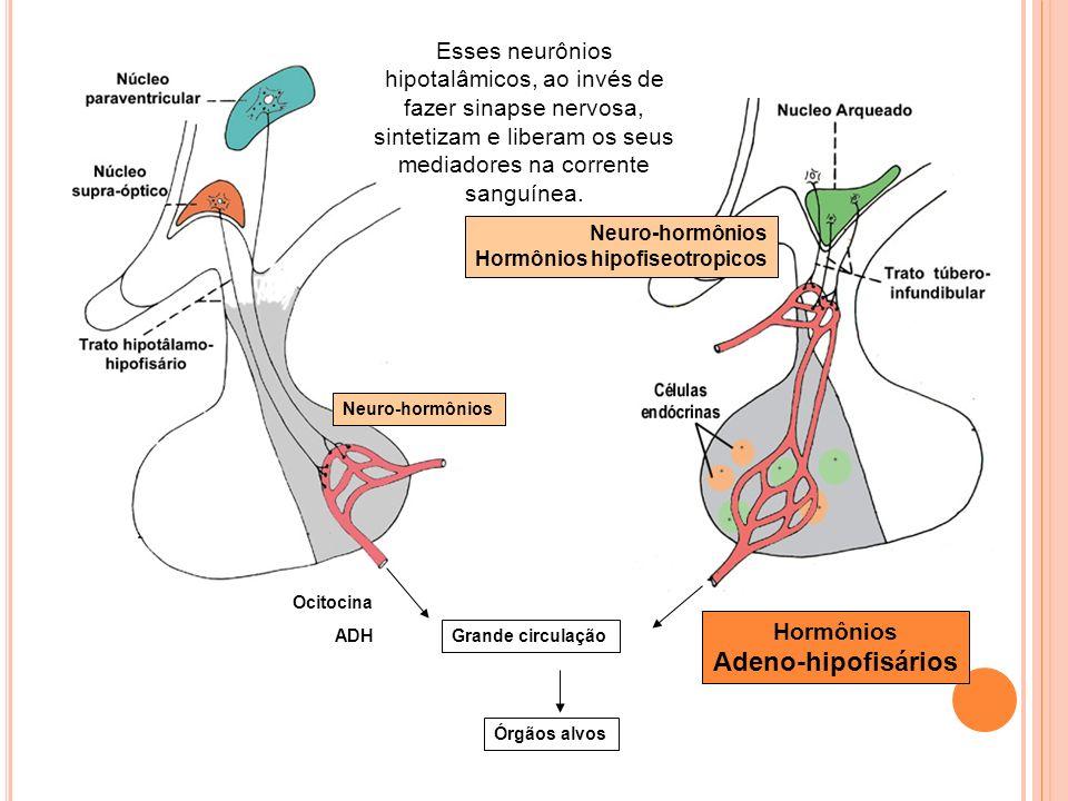 Grande circulação Órgãos alvos Neuro-hormônios Hormônios hipofiseotropicos Hormônios Adeno-hipofisários Esses neurônios hipotalâmicos, ao invés de faz