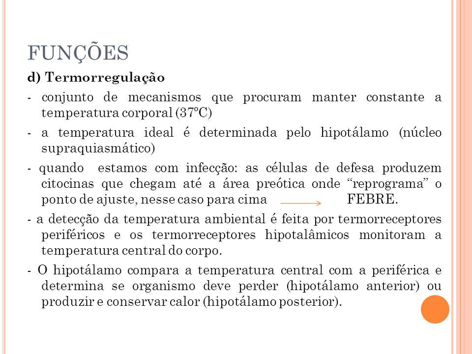 FUNÇÕES d) Termorregulação - conjunto de mecanismos que procuram manter constante a temperatura corporal (37ºC) - a temperatura ideal é determinada pe
