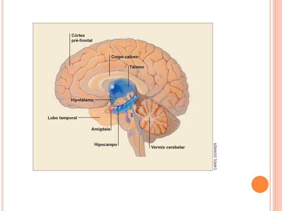 Grande circulação Órgãos alvos Neuro-hormônios Hormônios hipofiseotropicos Hormônios Adeno-hipofisários Esses neurônios hipotalâmicos, ao invés de fazer sinapse nervosa, sintetizam e liberam os seus mediadores na corrente sanguínea.