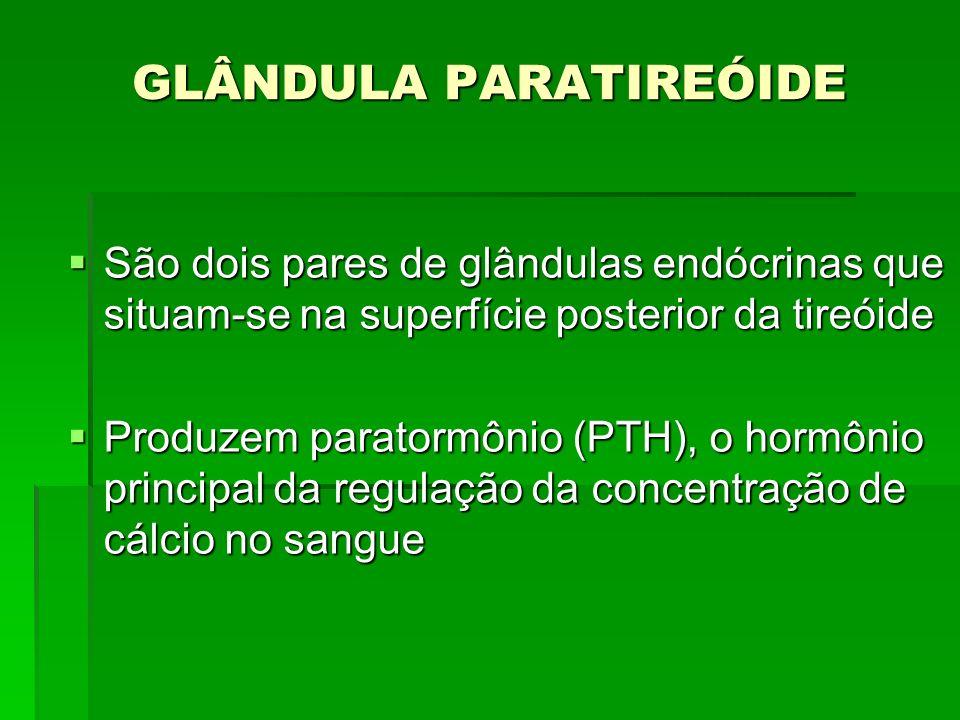 GLÂNDULA PARATIREÓIDE São dois pares de glândulas endócrinas que situam-se na superfície posterior da tireóide São dois pares de glândulas endócrinas