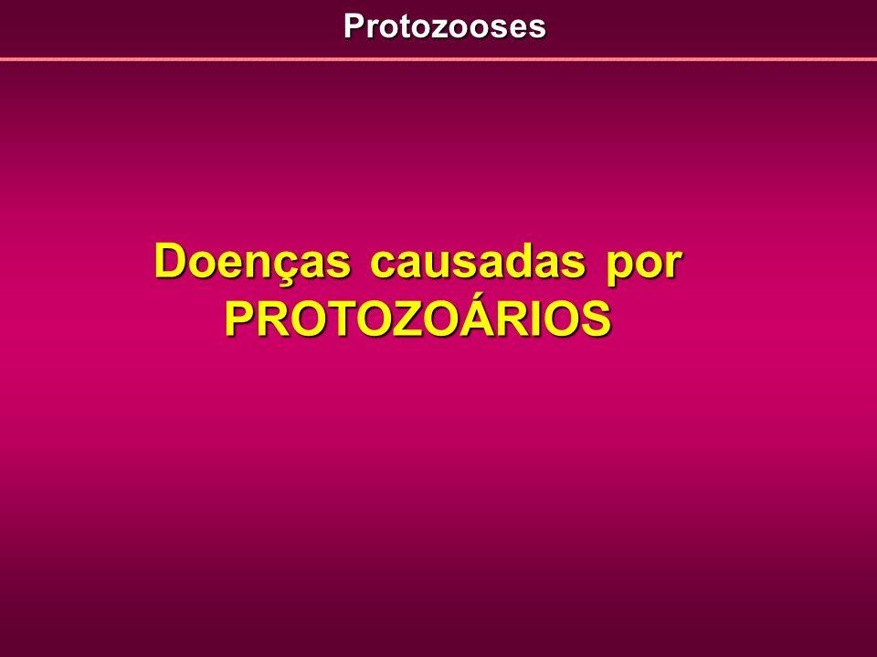 Doenças causadas por PROTOZOÁRIOS Protozooses