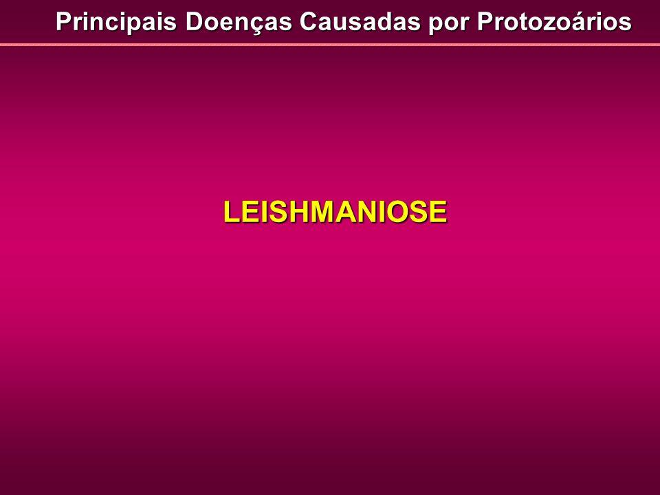 Principais Doenças Causadas por Protozoários LEISHMANIOSE