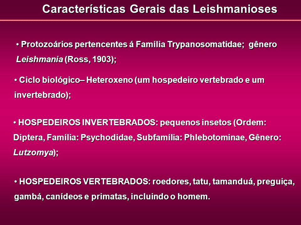 Características Gerais das Leishmanioses Protozoários pertencentes á Família Trypanosomatidae; gênero Leishmania (Ross, 1903); Protozoários pertencent