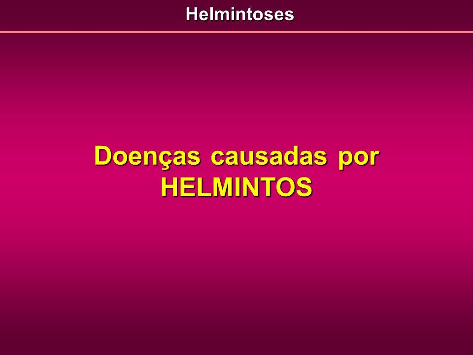 Doenças causadas por HELMINTOS Helmintoses