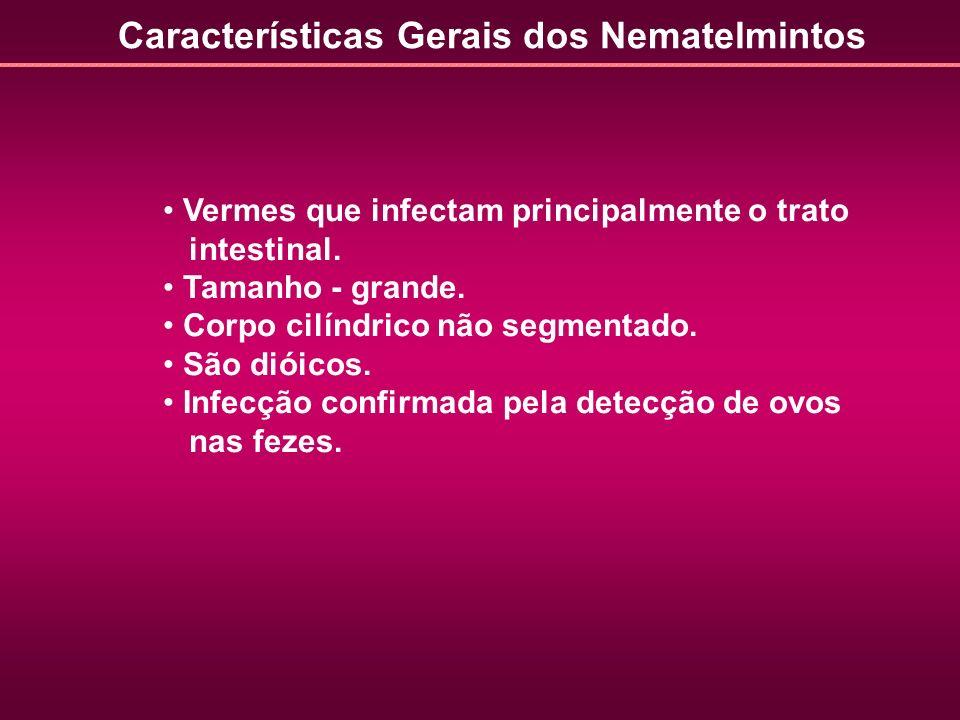 Características Gerais dos Nematelmintos Vermes que infectam principalmente o trato intestinal. Tamanho - grande. Corpo cilíndrico não segmentado. São