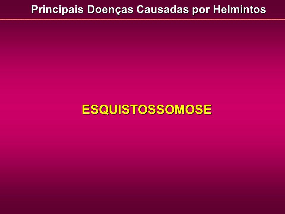 ESQUISTOSSOMOSE Principais Doenças Causadas por Helmintos