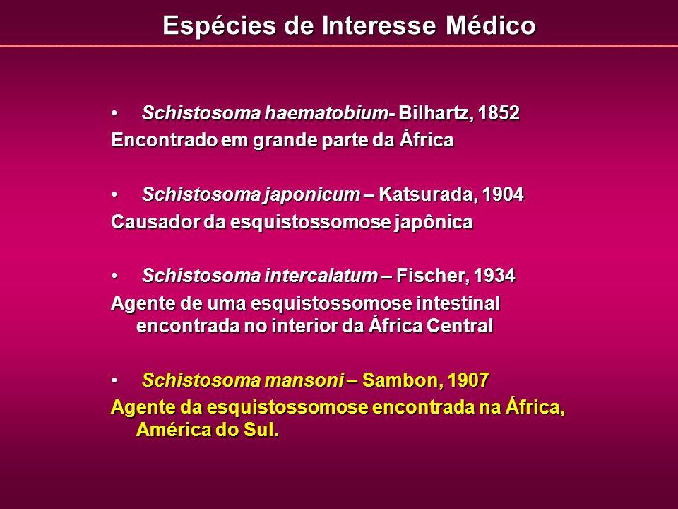 Espécies de Interesse Médico Schistosoma haematobium- Bilhartz, 1852 Schistosoma haematobium- Bilhartz, 1852 Encontrado em grande parte da África Schi