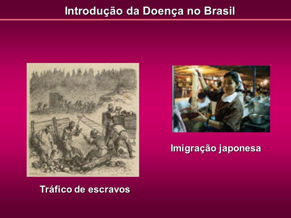 Introdução da Doença no Brasil Tráfico de escravos Imigração japonesa
