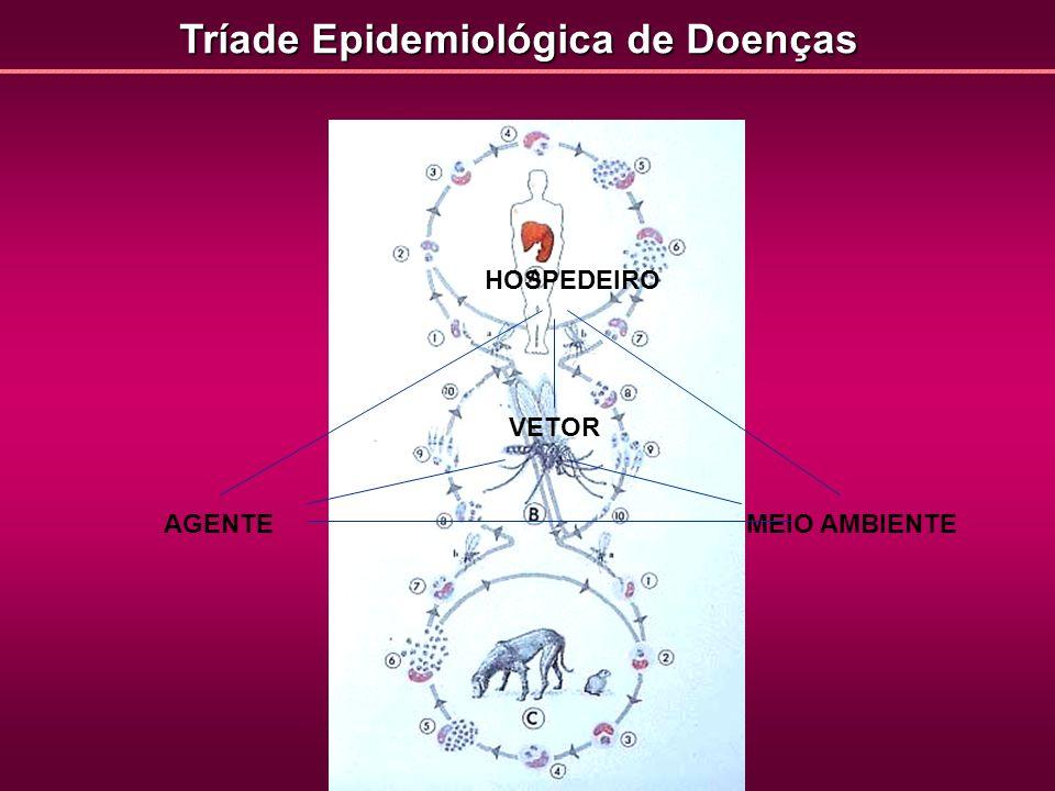Etiologia das Doenças Parasitárias AGENTE HOSPEDEIRO MEIO AMBIENTE VETOR Fatores relacionados aos componentes desse complexo sistema de interações: - Suscetibilidade / Resistência: fatores genéticos; estado nutricional; idade; sexo; status imunológico.