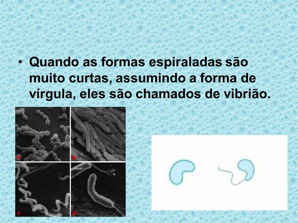 Quando as formas espiraladas são muito curtas, assumindo a forma de vírgula, eles são chamados de vibrião.