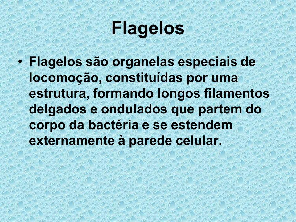 Flagelos Flagelos são organelas especiais de locomoção, constituídas por uma estrutura, formando longos filamentos delgados e ondulados que partem do