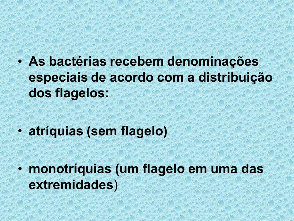 As bactérias recebem denominações especiais de acordo com a distribuição dos flagelos: atríquias (sem flagelo) monotríquias (um flagelo em uma das ext
