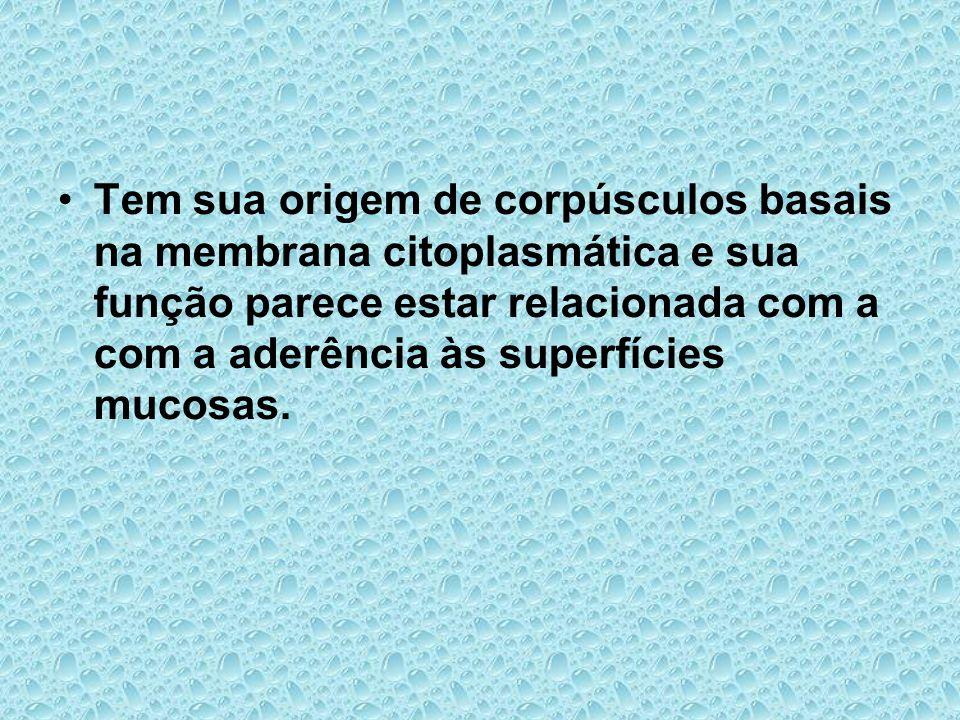 Tem sua origem de corpúsculos basais na membrana citoplasmática e sua função parece estar relacionada com a com a aderência às superfícies mucosas.