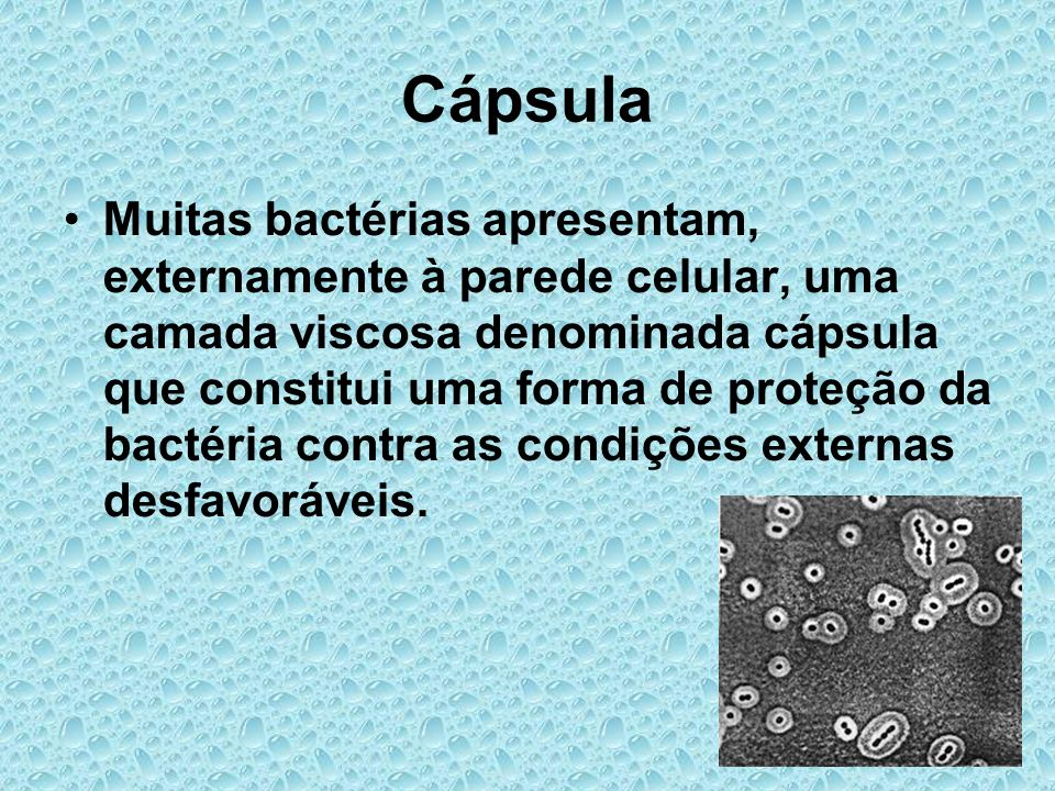 Cápsula Muitas bactérias apresentam, externamente à parede celular, uma camada viscosa denominada cápsula que constitui uma forma de proteção da bacté
