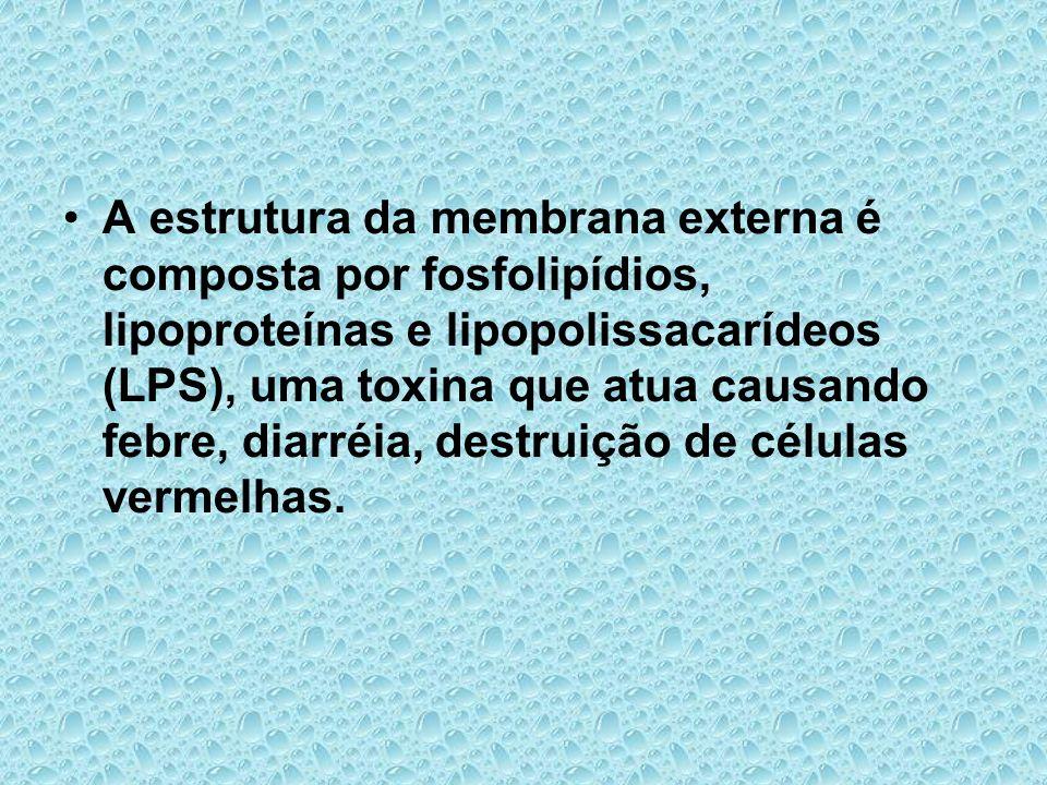 A estrutura da membrana externa é composta por fosfolipídios, lipoproteínas e lipopolissacarídeos (LPS), uma toxina que atua causando febre, diarréia,