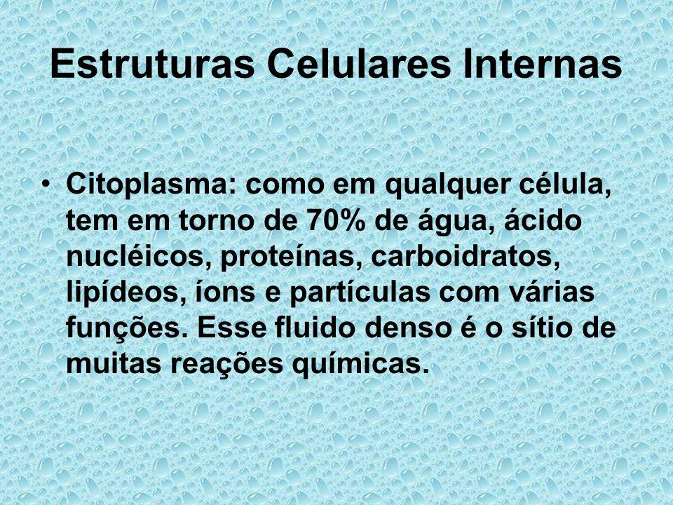 Estruturas Celulares Internas Citoplasma: como em qualquer célula, tem em torno de 70% de água, ácido nucléicos, proteínas, carboidratos, lipídeos, ío