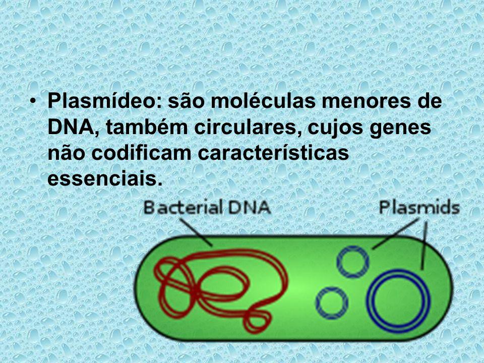Plasmídeo: são moléculas menores de DNA, também circulares, cujos genes não codificam características essenciais.