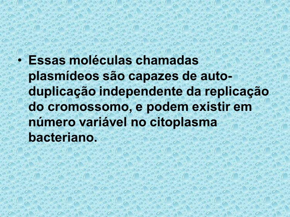 Essas moléculas chamadas plasmídeos são capazes de auto- duplicação independente da replicação do cromossomo, e podem existir em número variável no ci