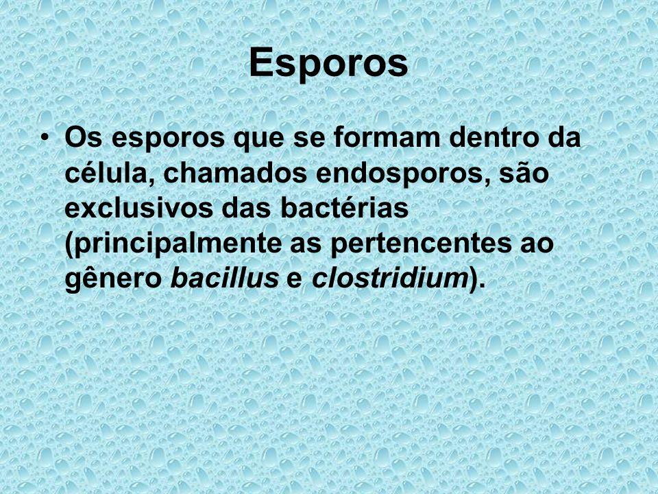 Esporos Os esporos que se formam dentro da célula, chamados endosporos, são exclusivos das bactérias (principalmente as pertencentes ao gênero bacillu