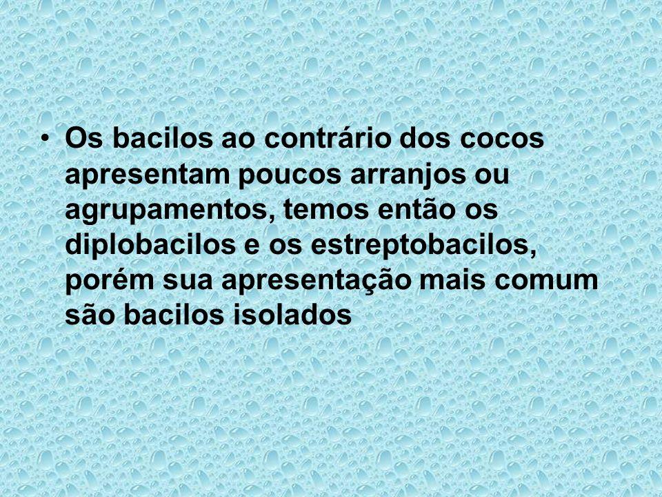 Os bacilos ao contrário dos cocos apresentam poucos arranjos ou agrupamentos, temos então os diplobacilos e os estreptobacilos, porém sua apresentação