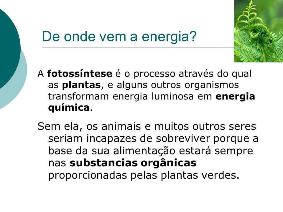 De onde vem a energia? A fotossíntese é o processo através do qual as plantas, e alguns outros organismos transformam energia luminosa em energia quím