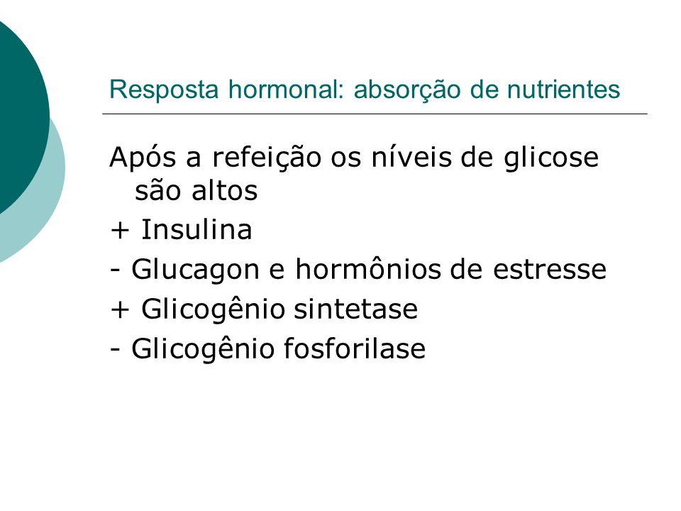 Resposta hormonal: absorção de nutrientes Após a refeição os níveis de glicose são altos + Insulina - Glucagon e hormônios de estresse + Glicogênio si