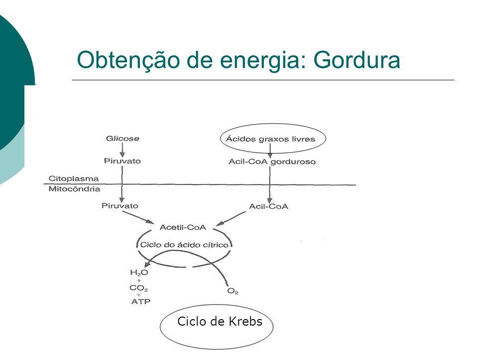 Obtenção de energia: Gordura Ciclo de Krebs