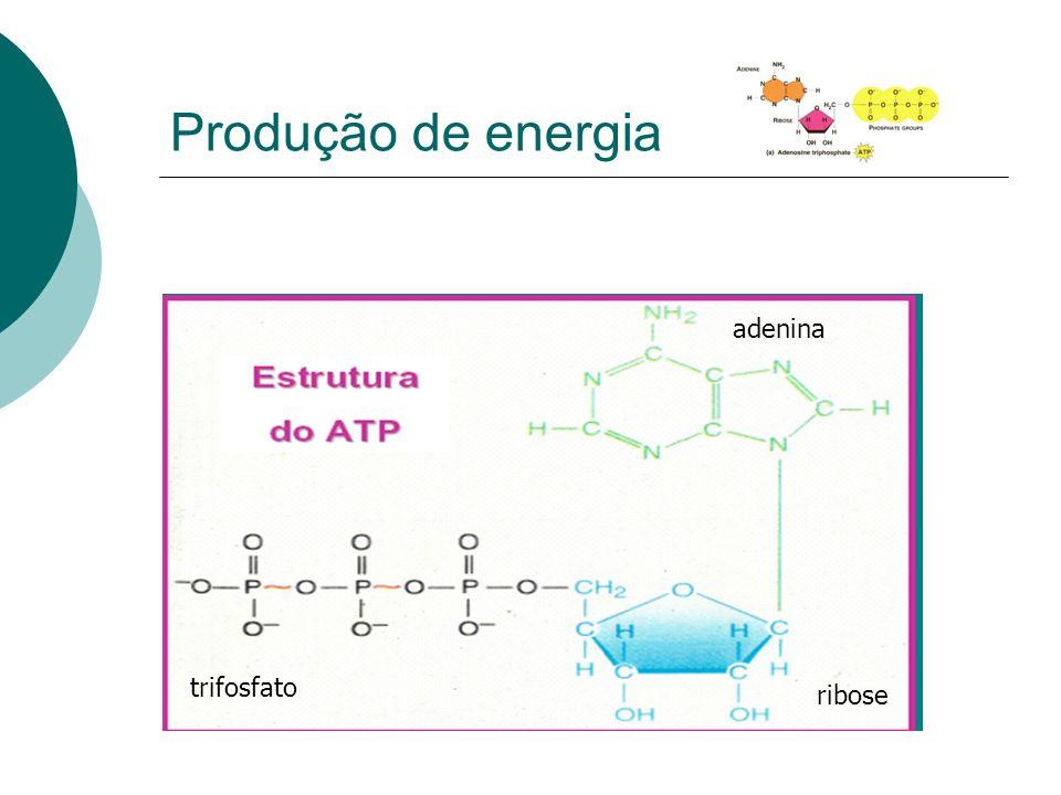 Produção de energia adenina ribose trifosfato