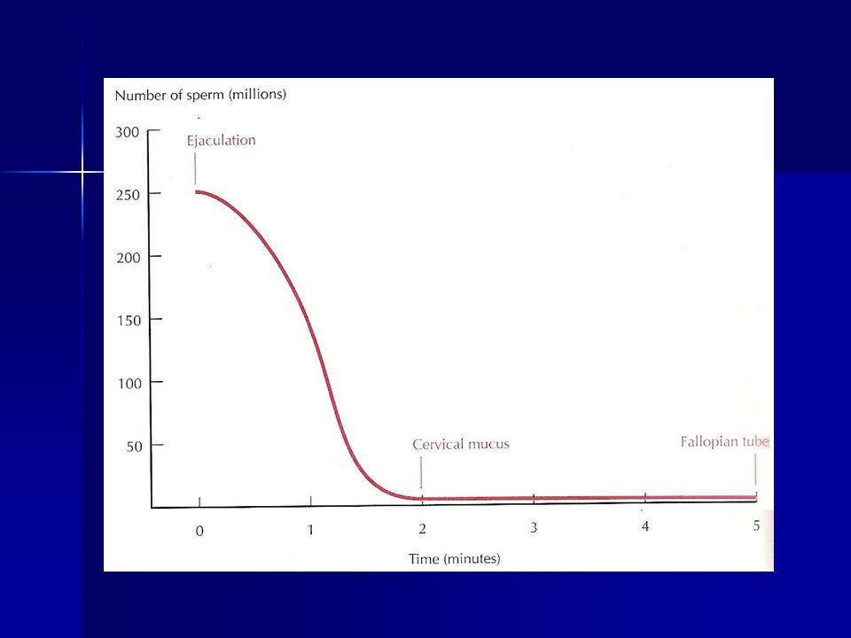Fertilização A perda de oócitos fertilizados antes da implantação é 46% A perda de oócitos fertilizados antes da implantação é 46% Em gravidezes clinicamente diagnosticadas, a taxa de abortamento de 1° de primeiro trimestre em mulheres jovens é d 15% Em gravidezes clinicamente diagnosticadas, a taxa de abortamento de 1° de primeiro trimestre em mulheres jovens é d 15% 50 – 60% possui anomalias cromossômicas.