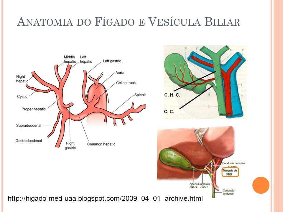 A NATOMIA DO F ÍGADO E V ESÍCULA B ILIAR http://higado-med-uaa.blogspot.com/2009_04_01_archive.html