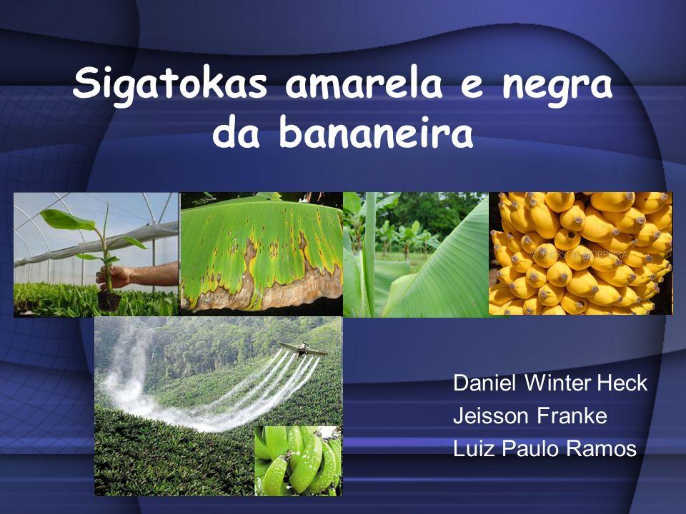 Sigatokas amarela e negra da bananeira Daniel Winter Heck Jeisson Franke Luiz Paulo Ramos