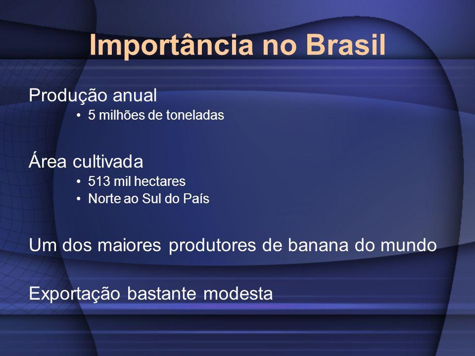Importância no Brasil Produção anual 5 milhões de toneladas Área cultivada 513 mil hectares Norte ao Sul do País Um dos maiores produtores de banana d