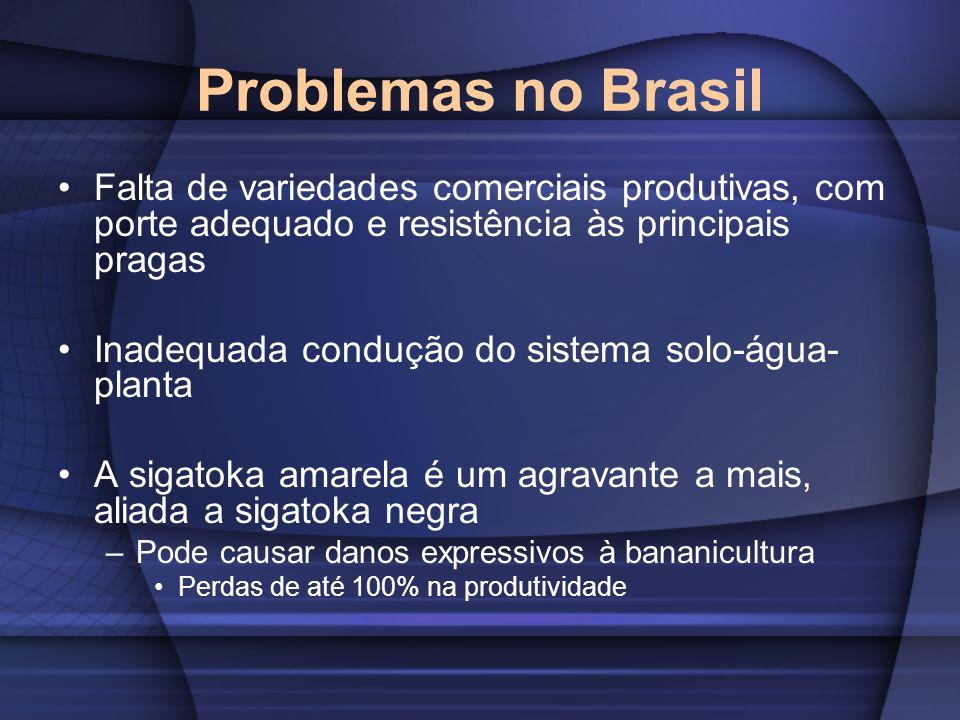 Problemas no Brasil Falta de variedades comerciais produtivas, com porte adequado e resistência às principais pragas Inadequada condução do sistema so