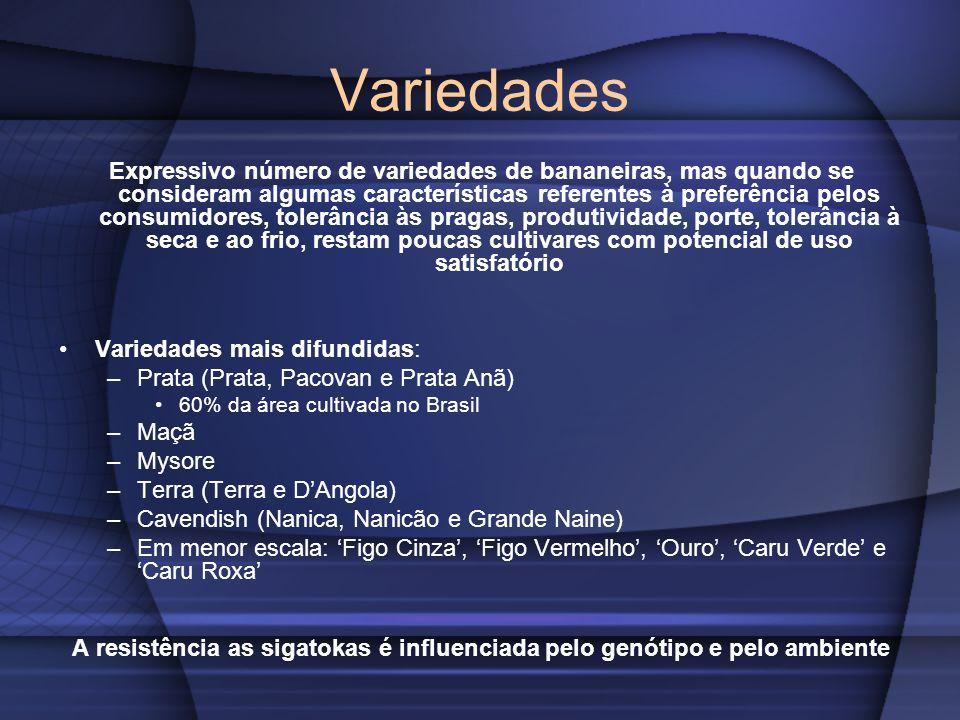 Variedades Expressivo número de variedades de bananeiras, mas quando se consideram algumas características referentes à preferência pelos consumidores