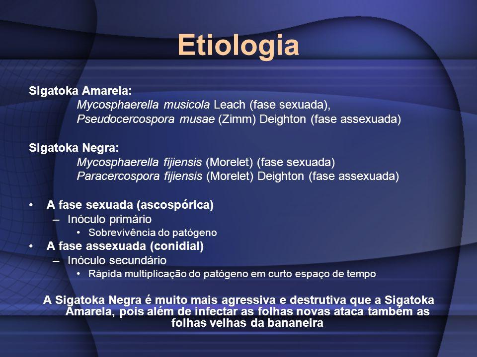 Etiologia Sigatoka Amarela: Mycosphaerella musicola Leach (fase sexuada), Pseudocercospora musae (Zimm) Deighton (fase assexuada) Sigatoka Negra: Myco