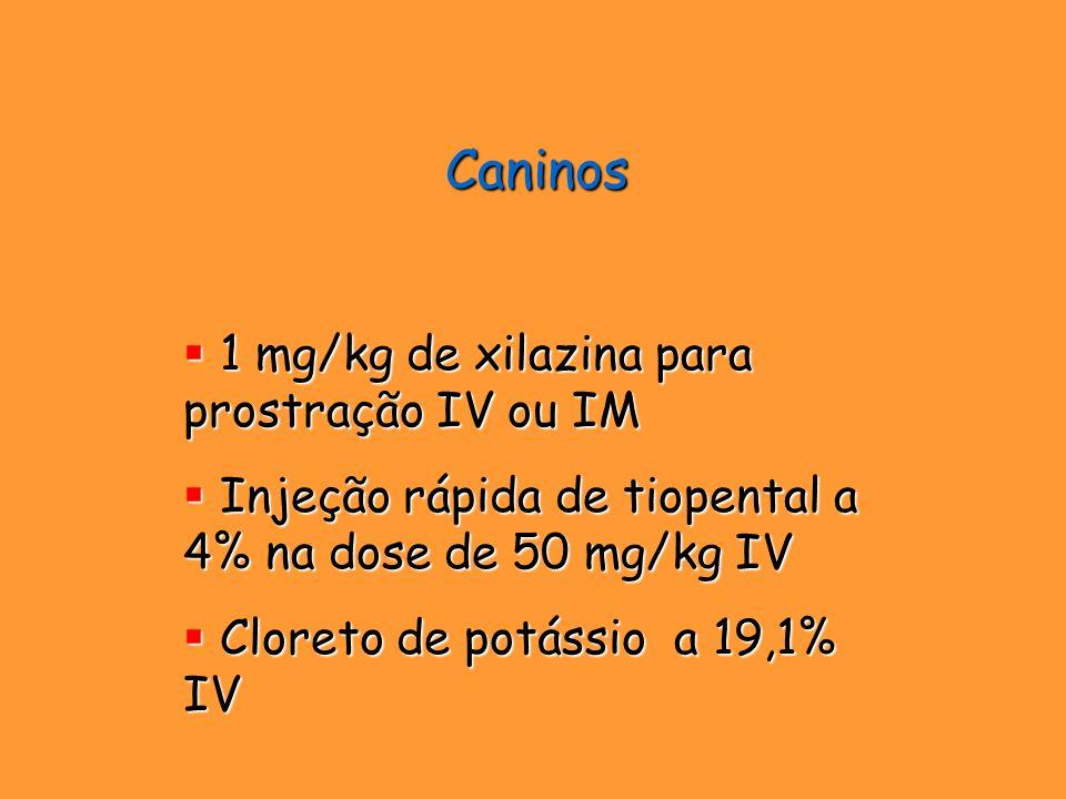 Caninos 1 mg/kg de xilazina para prostração IV ou IM 1 mg/kg de xilazina para prostração IV ou IM Injeção rápida de tiopental a 4% na dose de 50 mg/kg