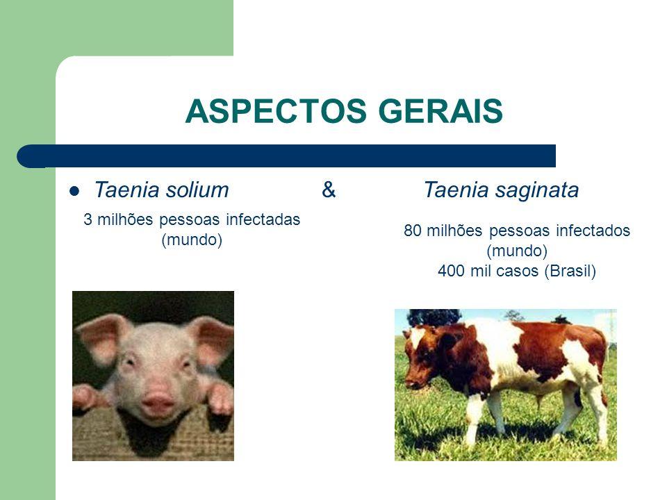 ASPECTOS GERAIS Taenia solium & Taenia saginata 3 milhões pessoas infectadas (mundo) 80 milhões pessoas infectados (mundo) 400 mil casos (Brasil)
