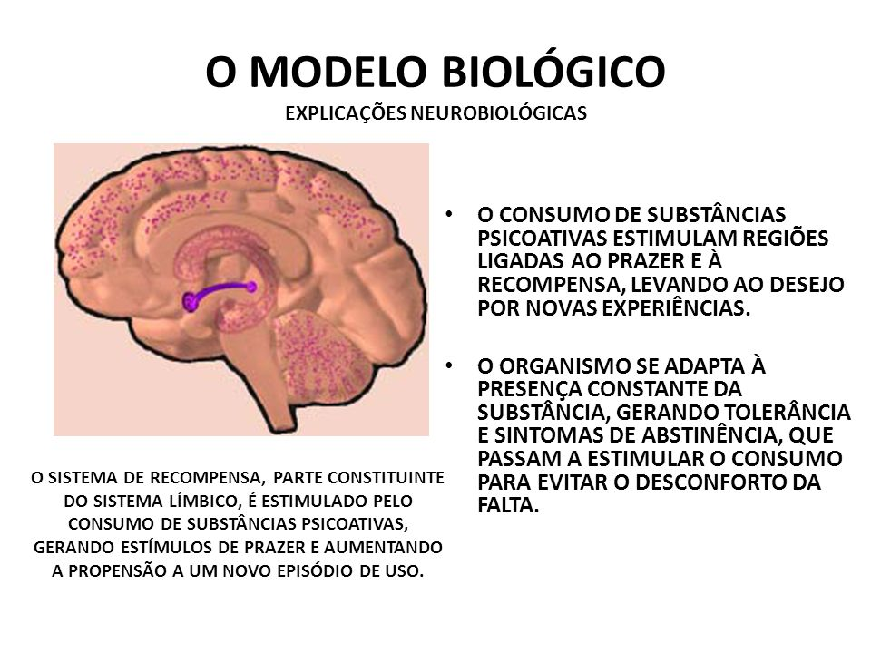 O MODELO BIOLÓGICO EXPLICAÇÕES NEUROBIOLÓGICAS O CONSUMO DE SUBSTÂNCIAS PSICOATIVAS ESTIMULAM REGIÕES LIGADAS AO PRAZER E À RECOMPENSA, LEVANDO AO DESEJO POR NOVAS EXPERIÊNCIAS.