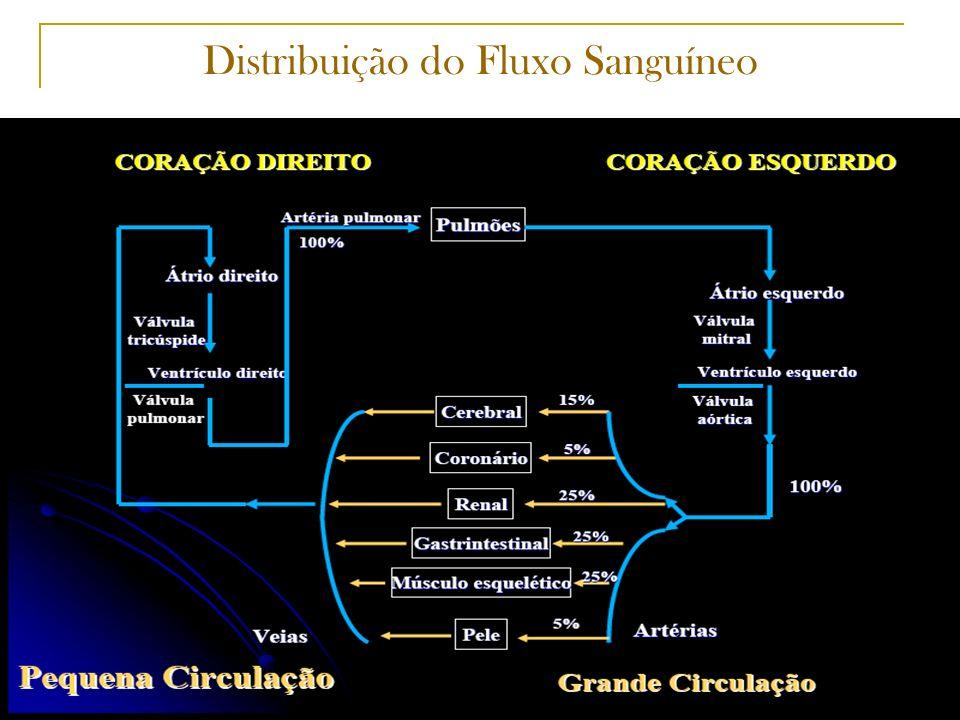 Distribuição do Fluxo Sanguíneo